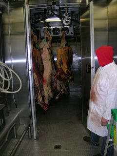 View of carcass cooler behind skinning area